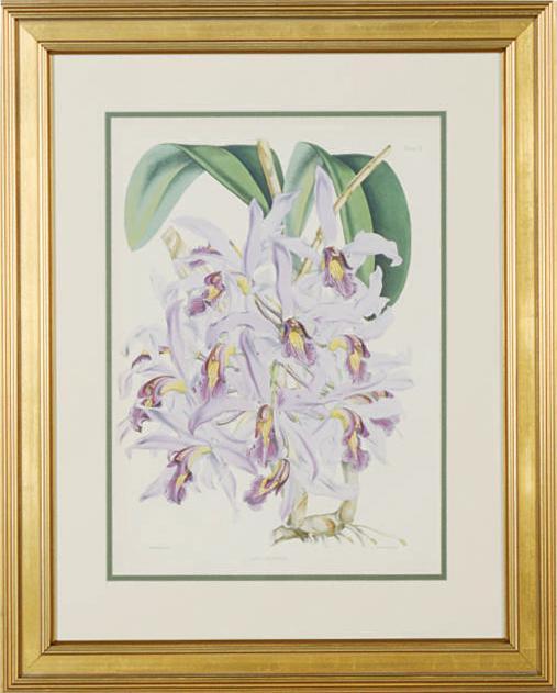 [Orchids]: Six Plates